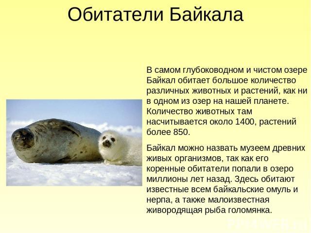 В самом глубоководном и чистом озере Байкал обитает большое количество различных животных и растений, как ни в одном из озер на нашей планете. Количество животных там насчитывается около 1400, растений более 850. Байкал можно назвать музеем древних …