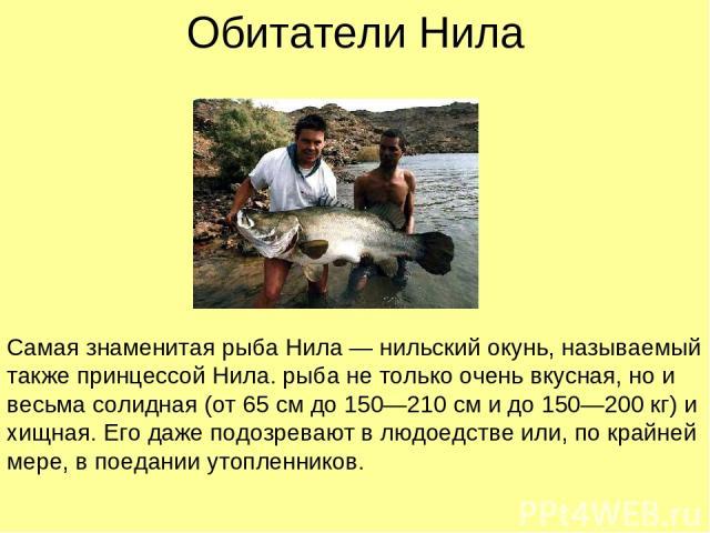 Обитатели Нила Самая знаменитая рыба Нила — нильский окунь, называемый также принцессой Нила. рыба не только очень вкусная, но и весьма солидная (от 65 см до 150—210 см и до 150—200 кг) и хищная. Его даже подозревают в людоедстве или, по крайней мер…