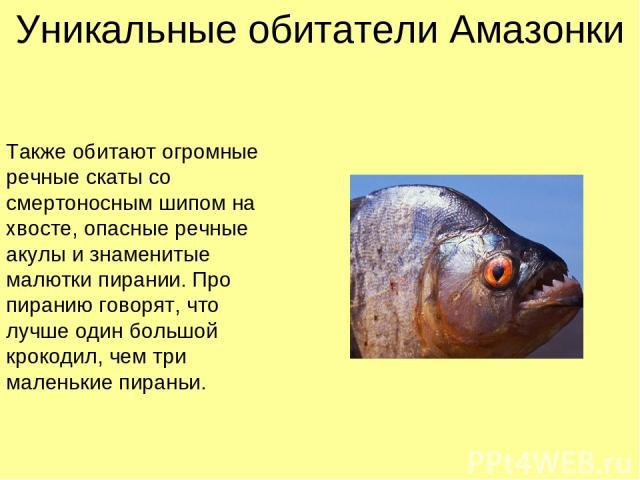 Также обитают огромные речные скаты со смертоносным шипом на хвосте, опасные речные акулы и знаменитые малютки пирании. Про пиранию говорят, что лучше один большой крокодил, чем три маленькие пираньи. Уникальные обитатели Амазонки