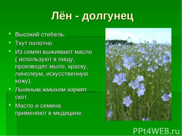 Лён - долгунец Высокий стебель. Ткут полотно. Из семян выжимают масло ( используют в пищу, производят мыло, краску, линолеум, искусственную кожу). Льняным жмыхом кормят скот. Масло и семена применяют в медицине.