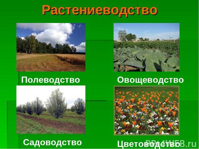 Растениеводство Садоводство Цветоводство Полеводство Овощеводство