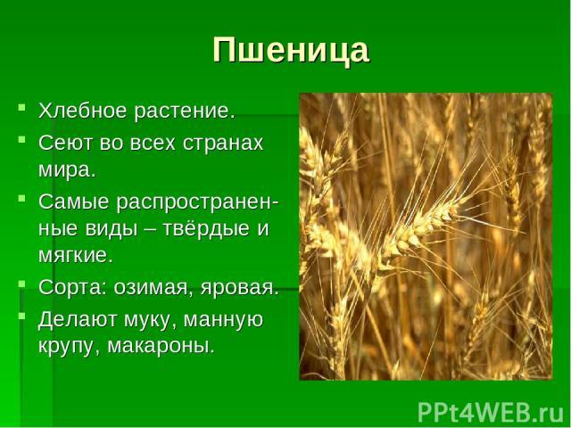 Пшеница Хлебное растение. Сеют во всех странах мира. Самые распространен-ные виды – твёрдые и мягкие. Сорта: озимая, яровая. Делают муку, манную крупу, макароны.
