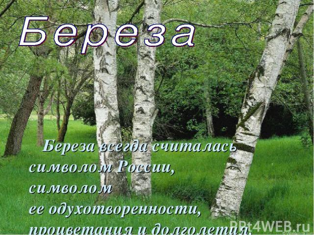 Береза всегда считалась символом России, символом ееодухотворенности, процветания идолголетия.