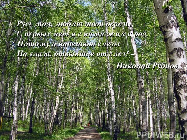 Русь моя, люблю твои березы, С первых лет я с ними жил и рос. Потому и набегают слезы На глаза, отвыкшие от слез! – Николай Рубцов.