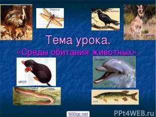 Тема урока. «Среды обитания животных». 900igr.net