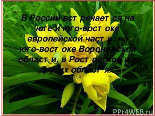 В России встречается на юге и юго-востоке европейской части: на юго-востоке Воро