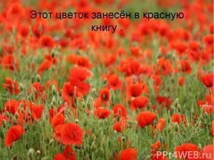 Этот цветок занесён в красную книгу .