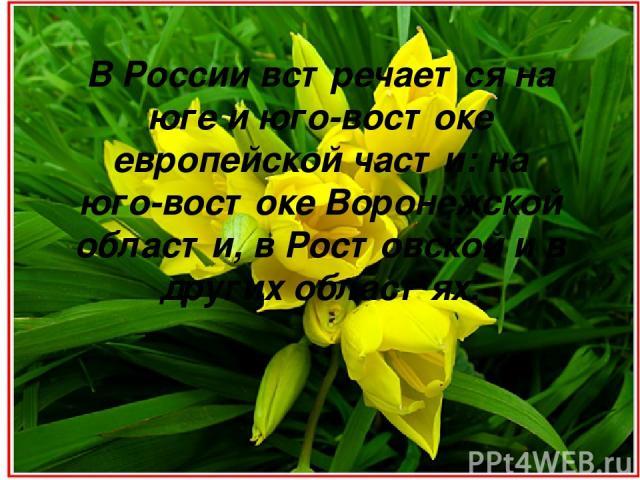 В России встречается на юге и юго-востоке европейской части: на юго-востоке Воронежской области, в Ростовской и в других областях.