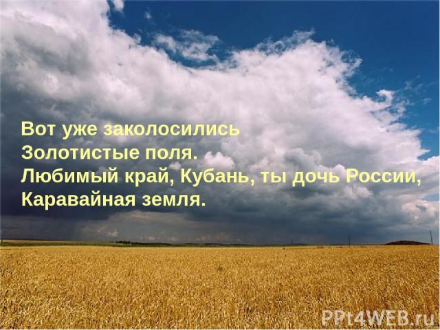 Вот уже заколосились Золотистые поля. Любимый край, Кубань, ты дочь России, Каравайная земля.
