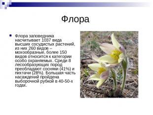 Флора Флора заповедника насчитывает 1037 вида высших сосудистых растений, из них