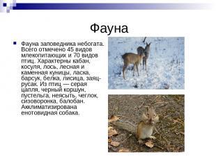 Фауна Фауна заповедника небогата. Всего отмечено 45 видов млекопитающих и 70 вид