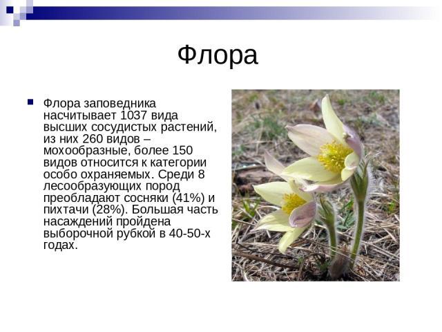 Флора Флора заповедника насчитывает 1037 вида высших сосудистых растений, из них 260 видов – мохообразные, более 150 видов относится к категории особо охраняемых. Среди 8 лесообразующих пород преобладают сосняки (41%) и пихтачи (28%). Большая часть …