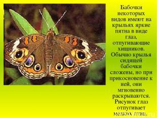 Бабочки некоторых видов имеют на крыльях яркие пятна в виде глаз, отпугивающие х
