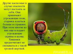 Другие насекомые в случае опасности могут постоять за себя. Они принимают угрожа