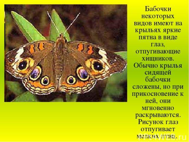 Бабочки некоторых видов имеют на крыльях яркие пятна в виде глаз, отпугивающие хищников. Обычно крылья сидящей бабочки сложены, но при прикосновение к ней, они мгновенно раскрываются. Рисунок глаз отпугивает мелких птиц.