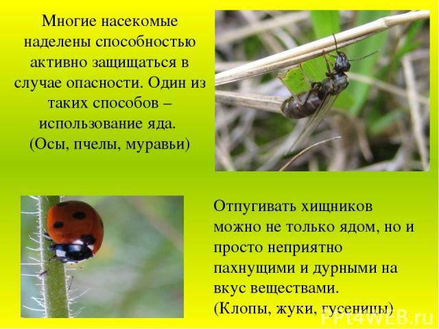 Многие насекомые наделены способностью активно защищаться в случае опасности. Один из таких способов – использование яда. (Осы, пчелы, муравьи) Отпугивать хищников можно не только ядом, но и просто неприятно пахнущими и дурными на вкус веществами. (…