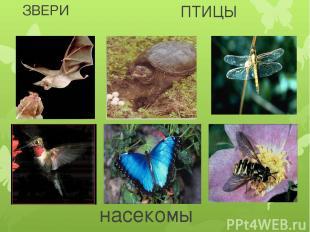 ЗВЕРИ ПТИЦЫ насекомые
