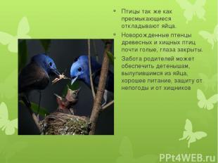 Птицы так же как пресмыкающиеся откладывают яйца. Новорожденные птенцы древесных