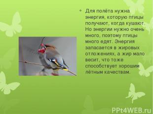 Для полёта нужна энергия, которую птицы получают, когда кушают. Но энергии нужно