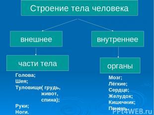Строение тела человека внешнее части тела внутреннее органы Голова; Шея; Туловищ