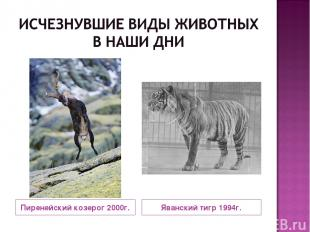 Пиренейский козерог 2000г. Яванский тигр 1994г.