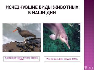 Канарский чёрный кулик-сорока 1994г. Речной дельфин Бейджи 2006г.