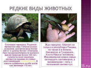 Слоновая черепаха. Родиной являются семь Галапагосских островов. достигая веса б