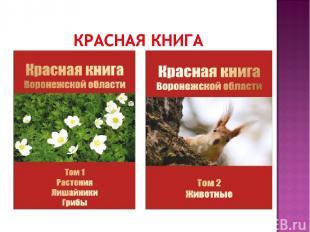 Красная книга Российской Федерации ЖИВОТНЫЕ Красная книга Российской Федерации Р
