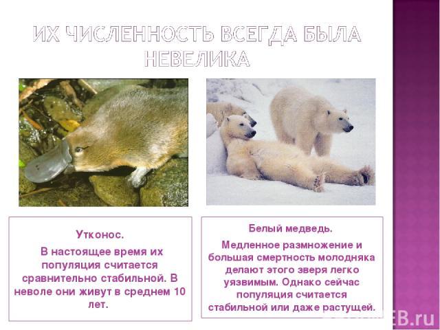 Утконос. В настоящее время их популяция считается сравнительно стабильной. В неволе они живут в среднем 10 лет. Белый медведь. Медленное размножение и большая смертность молодняка делают этого зверя легко уязвимым. Однако сейчас популяция считается …
