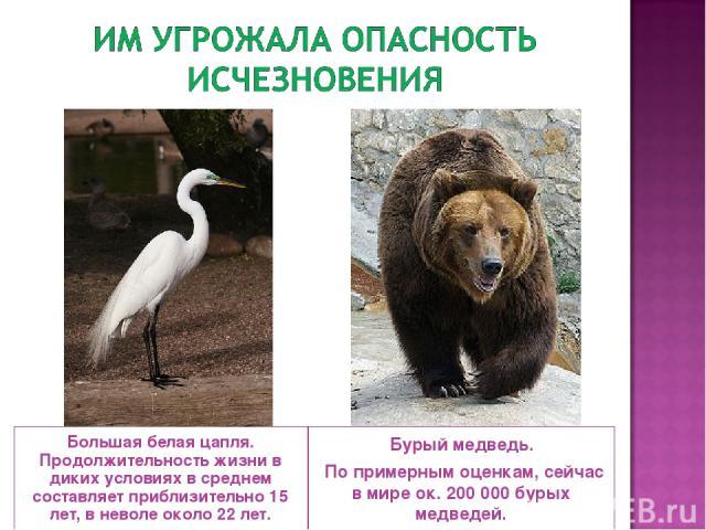 Большая белая цапля. Продолжительность жизни в диких условиях в среднем составляет приблизительно 15 лет, в неволе около 22 лет. Бурый медведь. По примерным оценкам, сейчас в мире ок. 200000 бурых медведей.