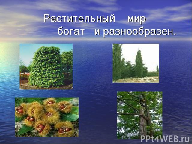 Растительный мир богат и разнообразен.