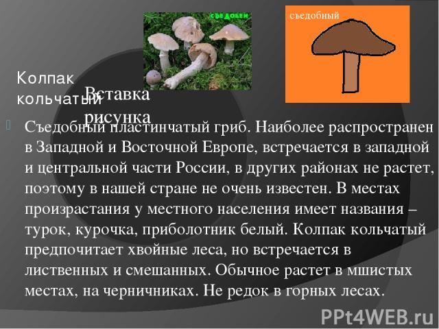 Колпак кольчатый Съедобный пластинчатый гриб. Наиболее распространен в Западной и Восточной Европе, встречается в западной и центральной части России, в других районах не растет, поэтому в нашей стране не очень известен. В местах произрастания у мес…