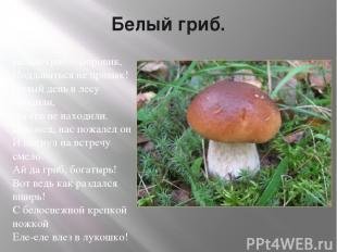 Белый гриб. Белый гриб – Боровик, Поддаваться не привык! Целый день в лесу броди