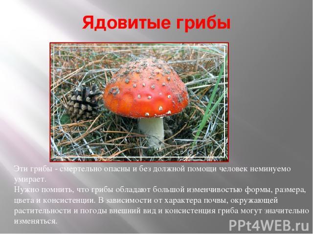 Ядовитые грибы Эти грибы - смертельно опасны и без должной помощи человек неминуемо умирает. Нужно помнить, что грибы обладают большой изменчивостью формы, размера, цвета и консистенции. В зависимости от характера почвы, окружающей растительности и …