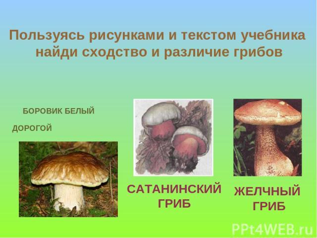 БОРОВИК БЕЛЫЙ ДОРОГОЙ САТАНИНСКИЙ ГРИБ ЖЕЛЧНЫЙ ГРИБ Пользуясь рисунками и текстом учебника найди сходство и различие грибов