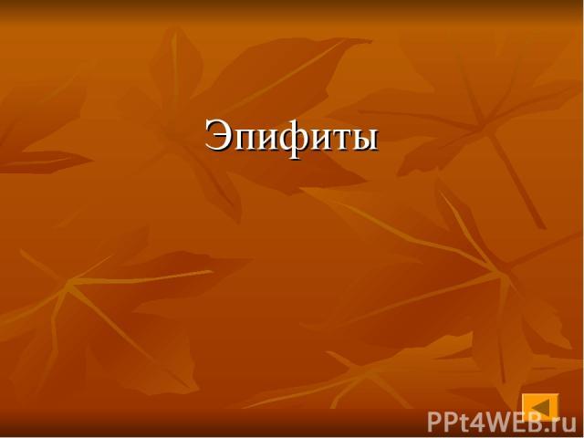 Эпифиты