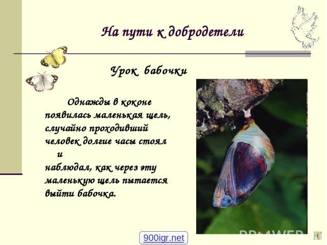 На пути к добродетели Однажды в коконе появилась маленькая щель, случайно проходивший человек долгие часы стоял и наблюдал, как через эту маленькую щель пытается выйти бабочка. Урок бабочки 900igr.net