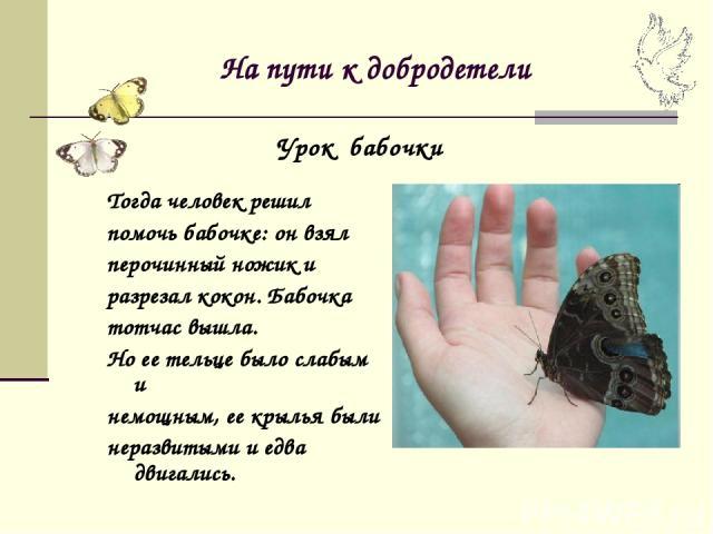 На пути к добродетели Тогда человек решил помочь бабочке: он взял перочинный ножик и разрезал кокон. Бабочка тотчас вышла. Но ее тельце было слабым и немощным, ее крылья были неразвитыми и едва двигались. Урок бабочки