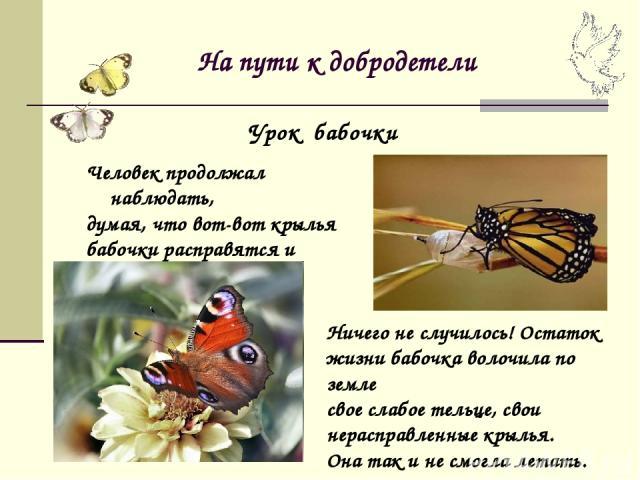 На пути к добродетели Человек продолжал наблюдать, думая, что вот-вот крылья бабочки расправятся и окрепнут и она сможет летать. Урок бабочки Ничего не случилось! Остаток жизни бабочка волочила по земле свое слабое тельце, свои нерасправленные крыль…
