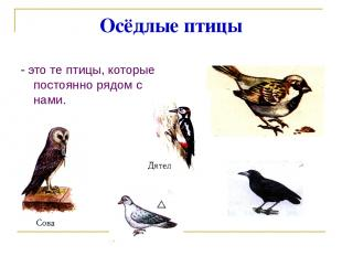 Осёдлые птицы - это те птицы, которые постоянно рядом с нами.