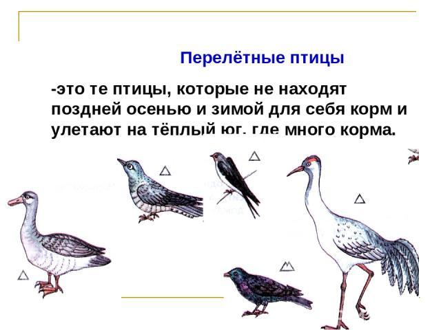 Перелётные птицы -это те птицы, которые не находят поздней осенью и зимой для себя корм и улетают на тёплый юг, где много корма.