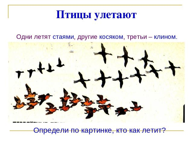 Птицы улетают Одни летят стаями, другие косяком, третьи – клином. Определи по картинке, кто как летит?