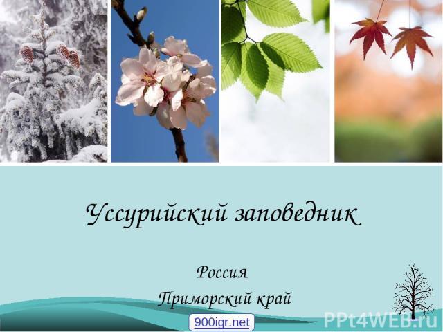 Уссурийский заповедник Россия Приморский край 900igr.net