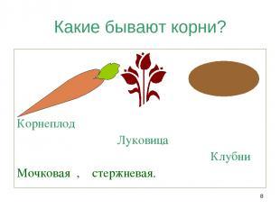 * Какие бывают корни? Корнеплод Луковица Клубни Мочковая , стержневая.