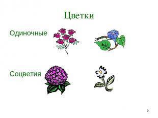 * Цветки Одиночные Соцветия
