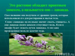 Это растение обладает приятным запахом, а называется оно – лаванда. Свое названи