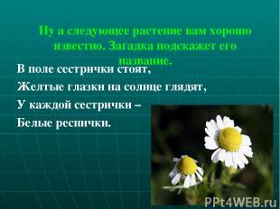 Ну а следующее растение вам хорошо известно. Загадка подскажет его название. В п