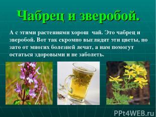 Чабрец и зверобой. А с этими растениями хорош чай. Это чабрец и зверобой. Вот та