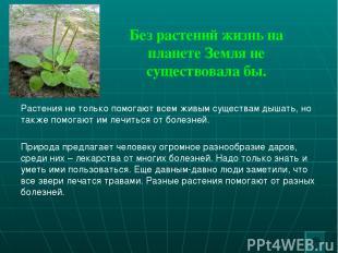 Без растений жизнь на планете Земля не существовала бы. Растения не только помог