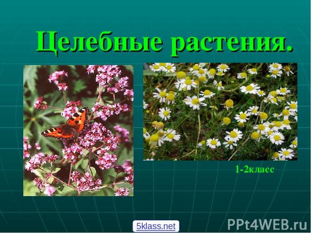 Целебные растения. 1-2класс 5klass.net